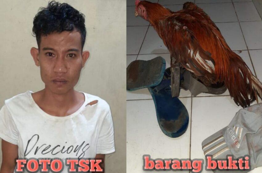 Maling Ayam Bangkok Dikepung Massa